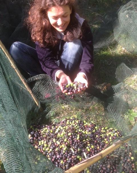 Olivenernte Oliven Selbstversorgung Autarkie Italien Olivenhain Permakultur Olivenöl DIY selber machen pflanzlich nachhaltig Oliven einlegen