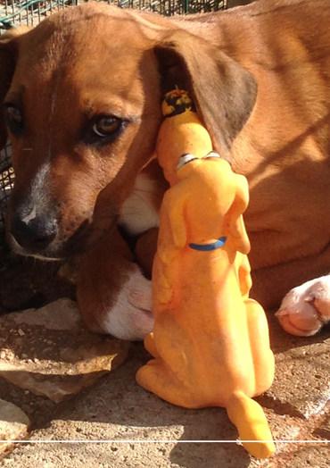 Dog Whisperer Website.jpg