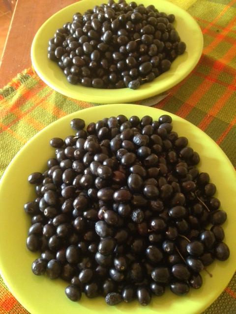 getrocknete Oliven konservieren Selbstversorgung Olivenernte schwarze Oliven Fermente pflanzlich