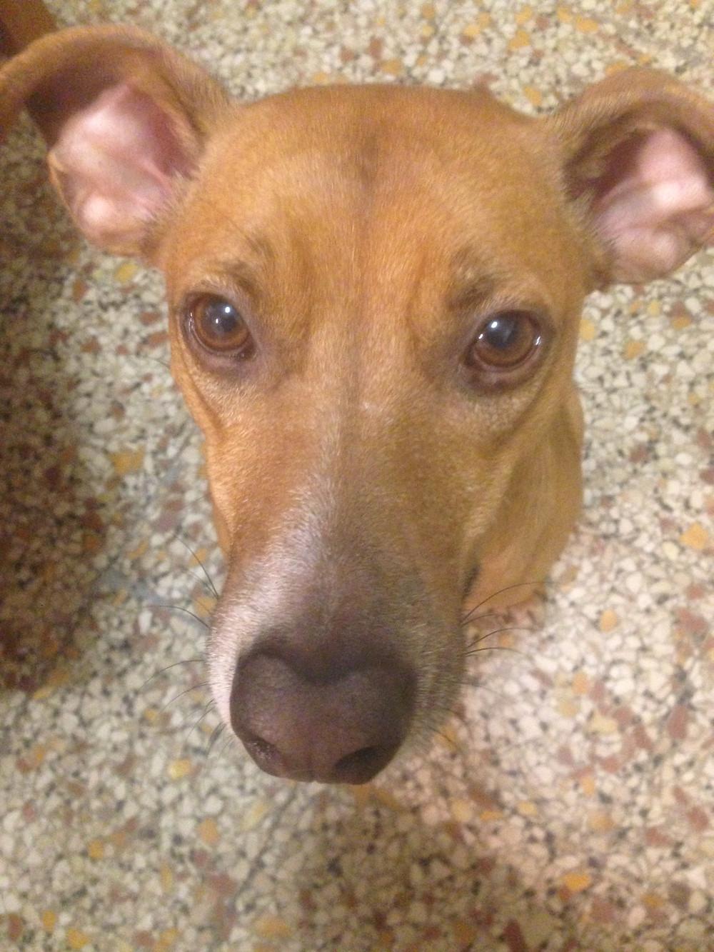 Physiognomik Hund Gesichtlesen hängende Nadel
