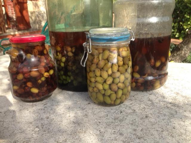 Oliven eingelegte haltbar konserviert Salzlake Fermentation Fermente Selbstversorgung DIY grüne Oliven schwarze