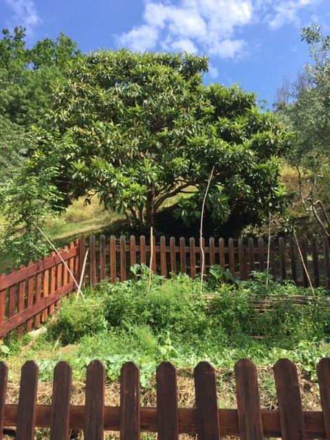 Mispelbaum Bauerngarten Aberglaube Hexen Selbstversorgung Italien Deutschland Autarkie
