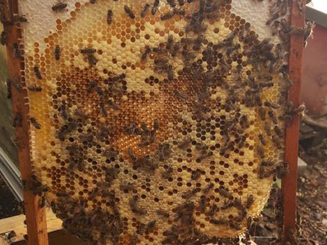 Gott ist ein Bienenvolk