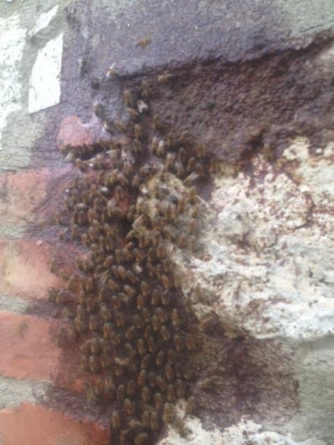 Bienen Honig Imkerei Artenvielfalt