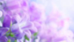 purple-flowers-background-wallpaper-1920