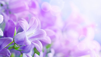 purple-flowers-background-wallpaper-1920