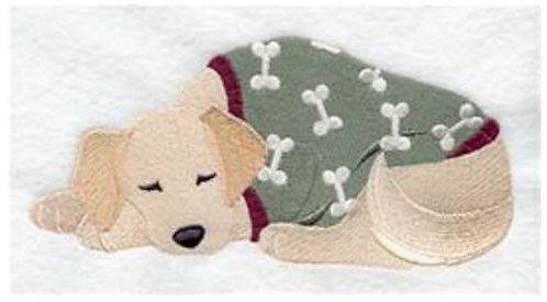 Labrador in PJs