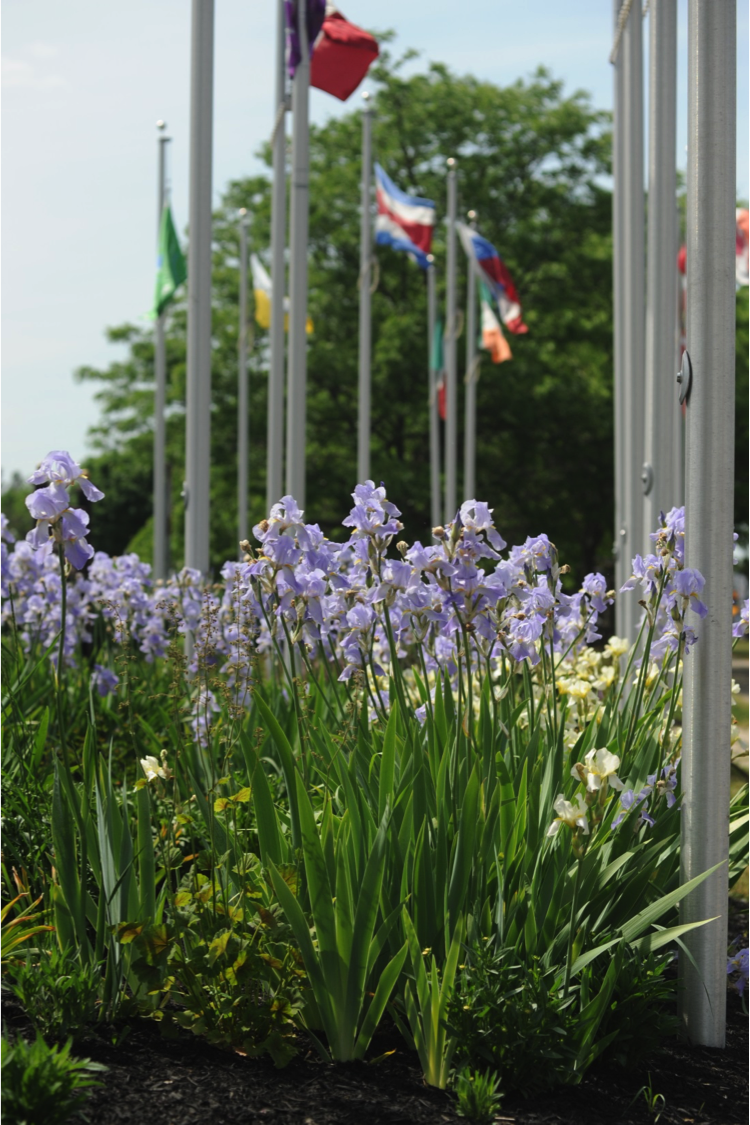IPG Batavia Flag Flowers