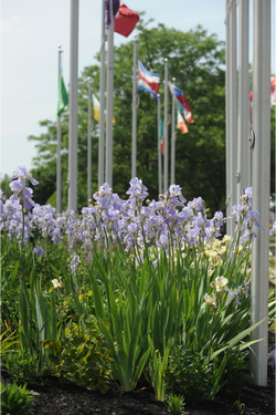 IPG Batavia Flag Flowers