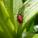 Resident Gardener Blog # 3