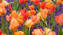 Resident Gardener USA Blog # 2