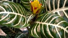 Resident Gardener USA Blog # 1
