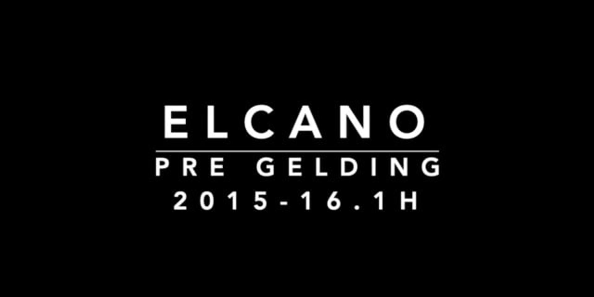 ELCANO - 2015 PRE Gelding