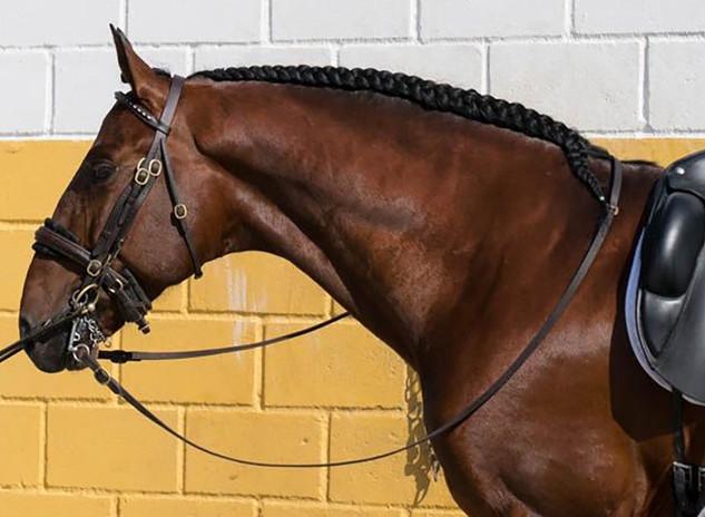 Vandalo - 2012 PRE Gelding