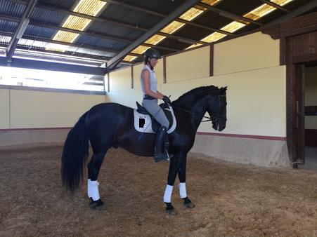Financiero - 5YO Stallion