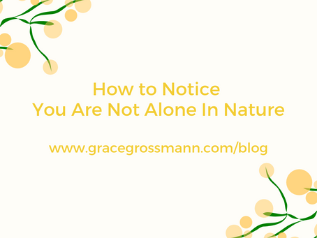 How to Notice You Are Not Alone In Nature