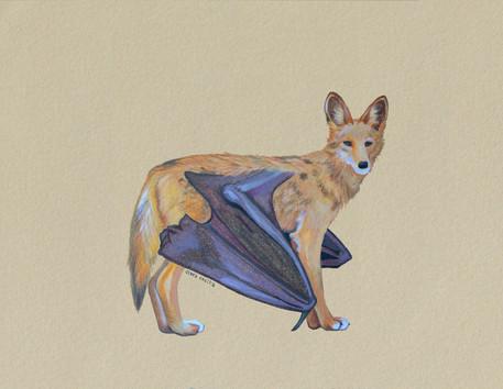 Coyote (Chimera No.4)