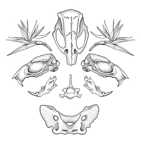 flash 25 skulls.jpg