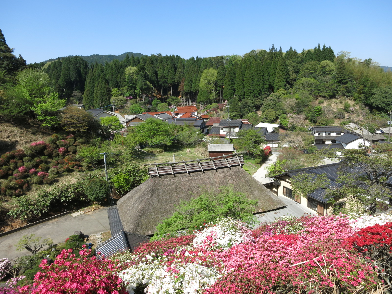 Spring in Koishiwara pottery village