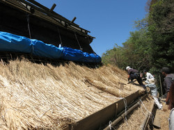 150 year old thatched roof