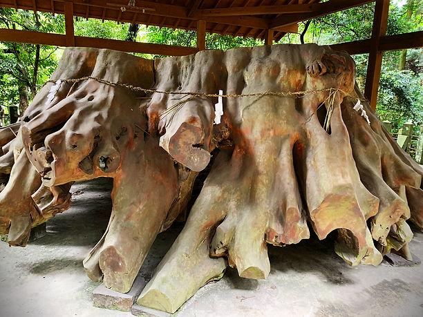 Aso-tree