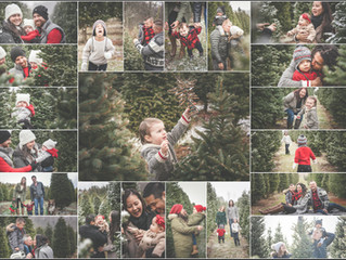 Holiday Tree Farm Fun!