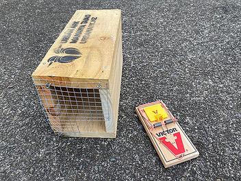 Maungawhau Ecological Halo Rat Trap