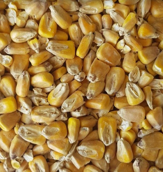 Maize Malt (Gladfield)