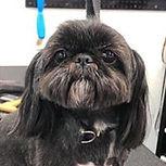 small black dog.jpg