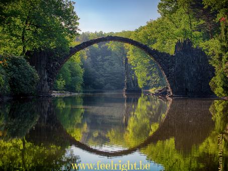 Le bain de forêt - un pont vers notre véritable Moi