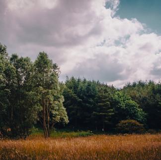 Burdon Moor - LR.jpg