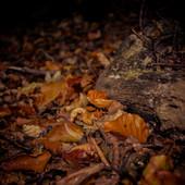 Wood 4.jpg
