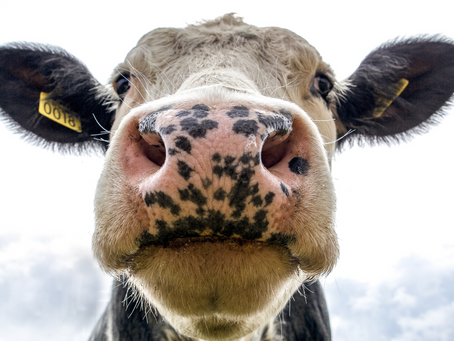 The Shocking News About Dairy You Didn't Know!