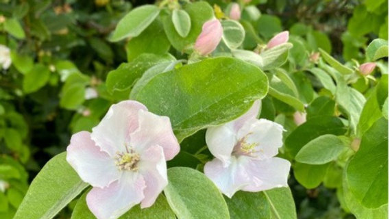 3. Quince - The Empress