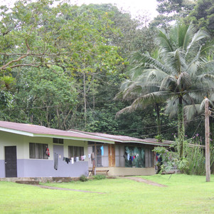My Month in a Costa Rican Rainforest: Monkeys, Spiders, and Two Bottles of DEET