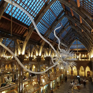 More Than Just a Bunch of Bones: The Contribution of Natural History Museums To Conservation