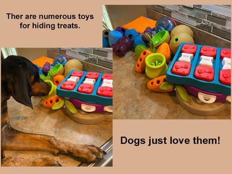 Indoor Dog Activities