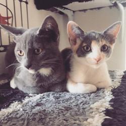 Fela + Mr Grey