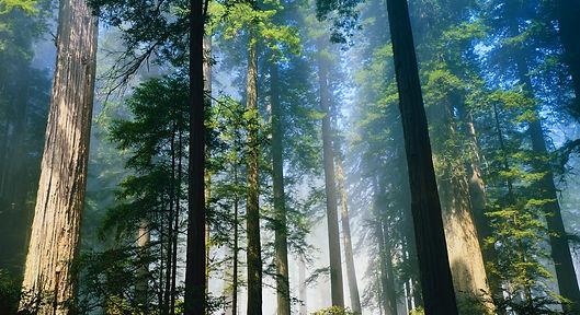 Elvan Mind Coach, accueil, site, coach de vie, séquoia,