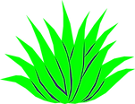 agave-mata.png