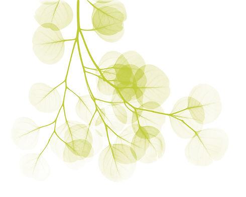 EucalyptusL257color.jpg
