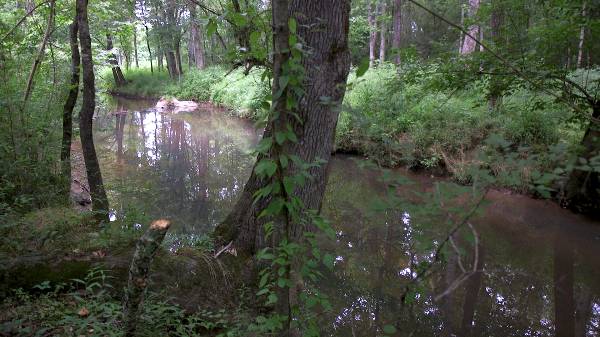 Four Mile Creek
