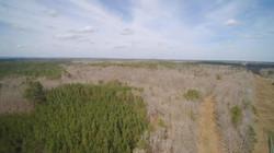 Aerial - Pine Plantation, Hardwood