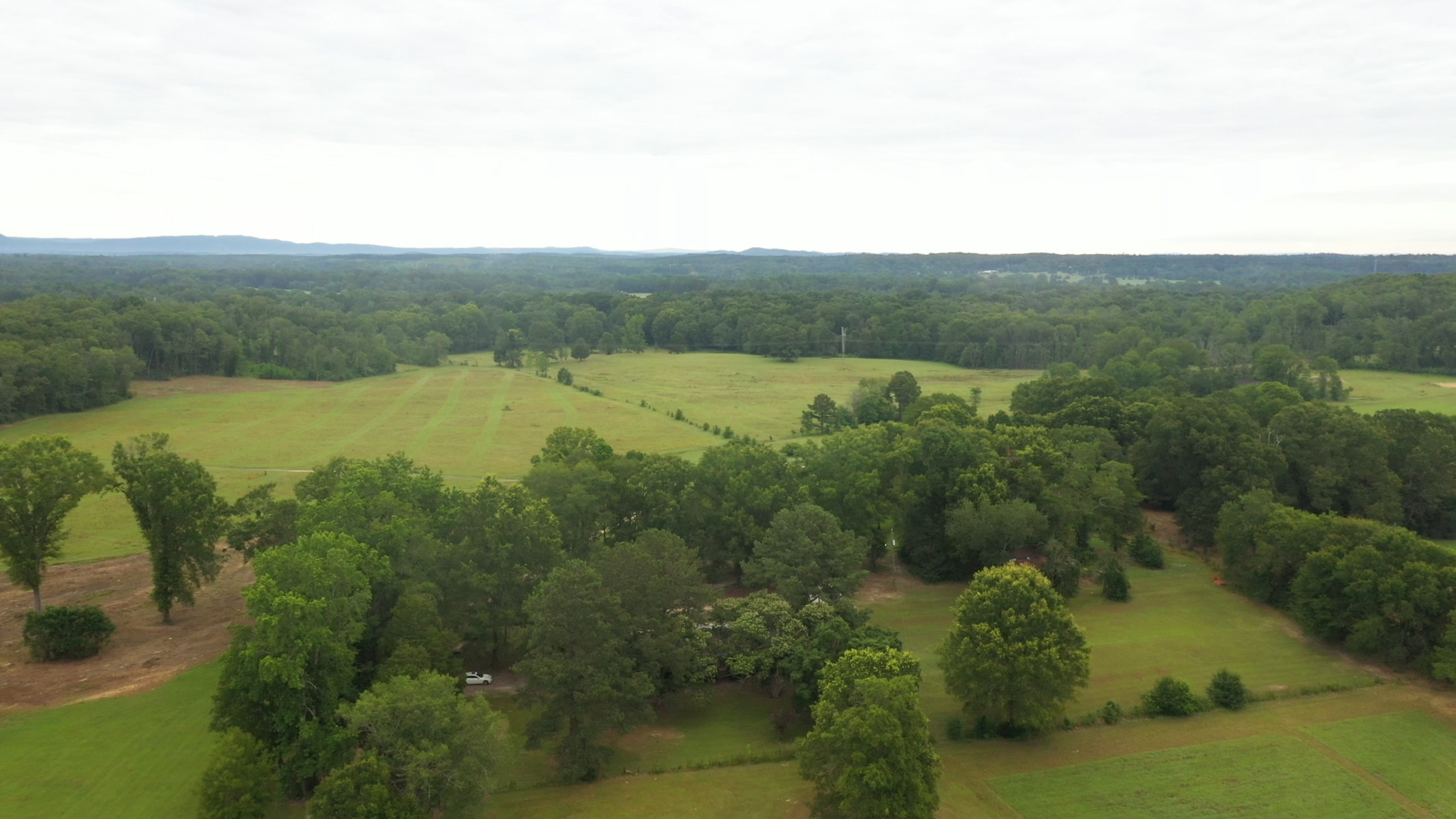 Pasture - tree line