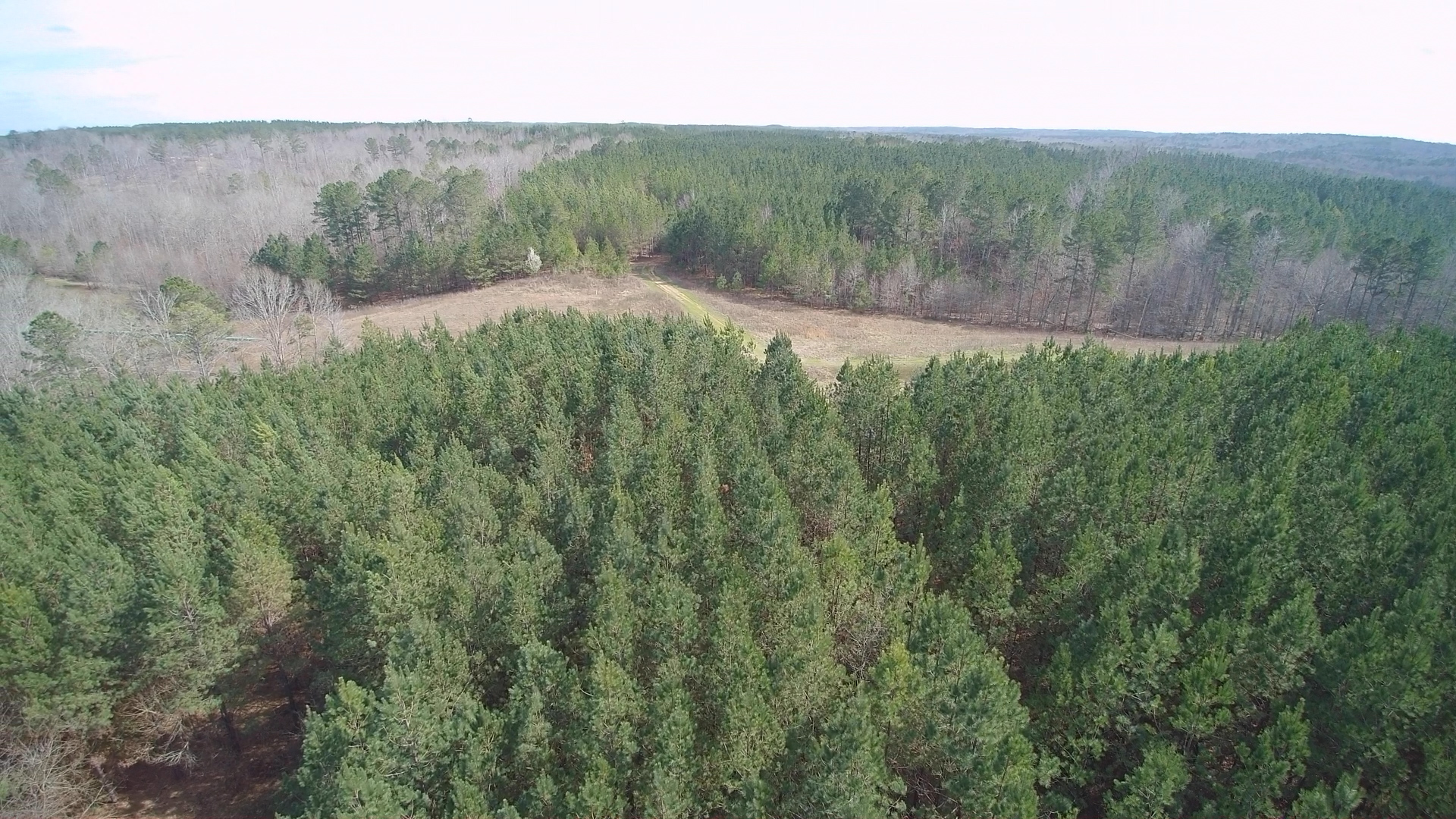 Aerial - Pine Plantation, Pipeline
