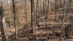 Stream Management Zone Hardwoods
