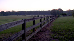 Pasture - Board Fence