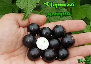 Черн.десерт- Украина.png