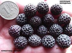 кумберленд вишневый
