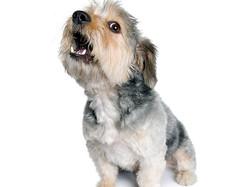 118439265-dog-barks-left-alone-632x475.jpg